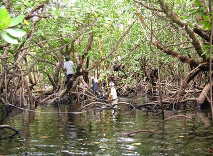 Mengembangkan Pariwisata Kepulauan  Con Dao Menurut Arah yang Berkelanjutan - ảnh 2