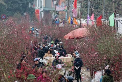 Flower villages in Hanoi bustling for Tet - ảnh 2