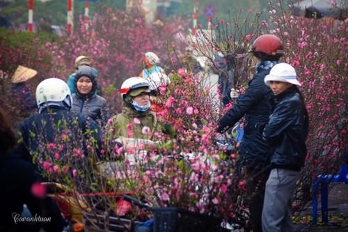 Flower villages in Hanoi bustling for Tet - ảnh 1