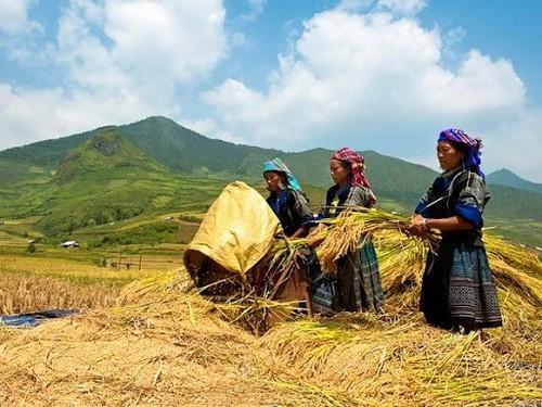 Evaluasi lima tahun program pengembangan perdagangan daerah pegunungan, daerah pedalaman, daerah terpencil, dan pulau-pulau - ảnh 1