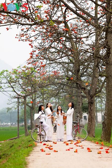 越南北部乡村鲜艳夺目的红色木棉花 - ảnh 14