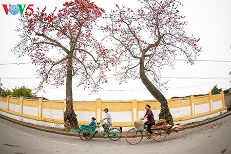 越南北部乡村鲜艳夺目的红色木棉花 - ảnh 7