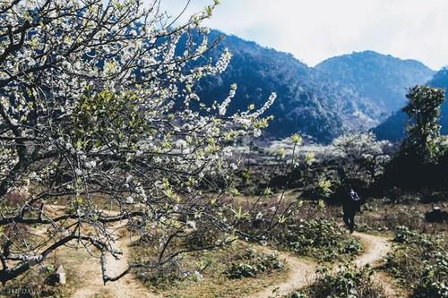 西北木州高原 - ảnh 1