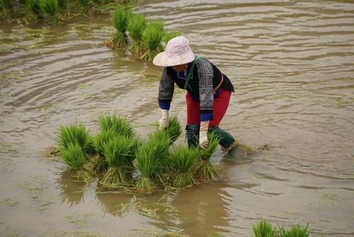 西北灌水季节之美 - ảnh 7