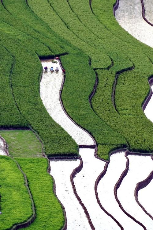 西北灌水季节之美 - ảnh 9