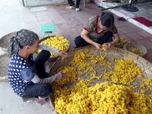 Co Chat silk village keeps thread alive - ảnh 5