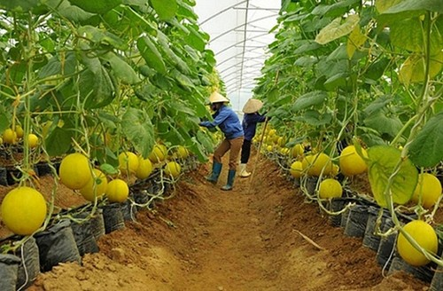 Binh Duong tightens links between agricultural production and distribution - ảnh 1