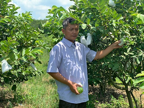 Binh Duong tightens links between agricultural production and distribution - ảnh 2