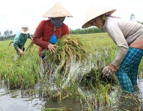 Agriculture vietnamienne face au changement climatique - ảnh 1