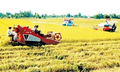Le FTA Vietnam-République de Corée favorise l'agriculture vietnamienne - ảnh 1