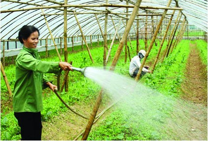 Investir davantage dans le développement agricole et rural - ảnh 2