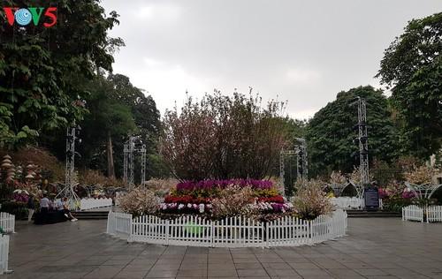 Festival Bunga Sakura Jepang-Ha Noi 2019 - ảnh 1