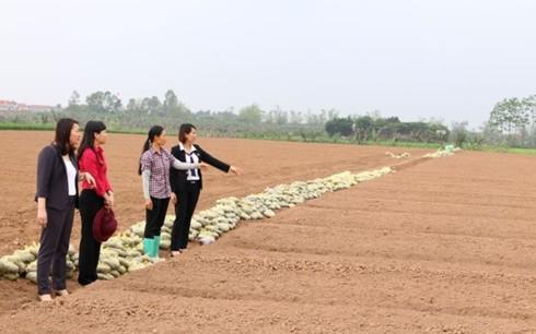 Provinsi Bac Ninh membantu para perempuan melakukan usaha start-up secara efektif - ảnh 1