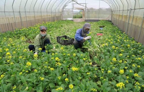 Aumenta la exportación de frutas y hortalizas de Vietnam  - ảnh 1