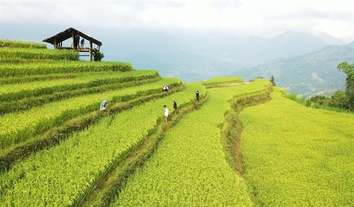 Ha Giang Culture and Tourism Week to honor Hoang Su Phi terraced fields - ảnh 1