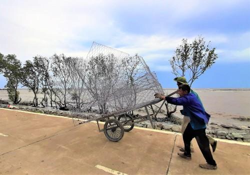 Nguyen Thanh Tuan, el guardián de los diques de Ca Mau - ảnh 2