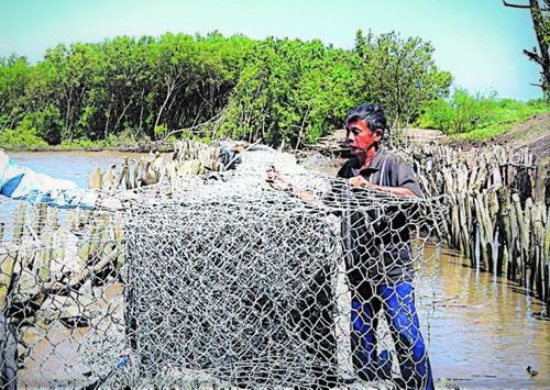 Nguyen Thanh Tuan, el guardián de los diques de Ca Mau - ảnh 1