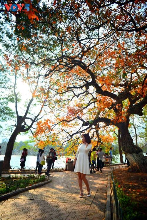 Màu áo mới của Hồ Gươm giữa mùa cây thay lá - ảnh 4