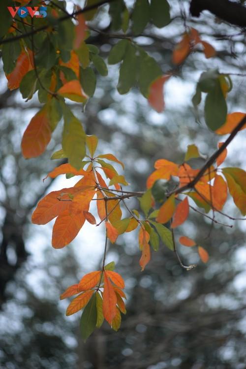 Màu áo mới của Hồ Gươm giữa mùa cây thay lá - ảnh 13