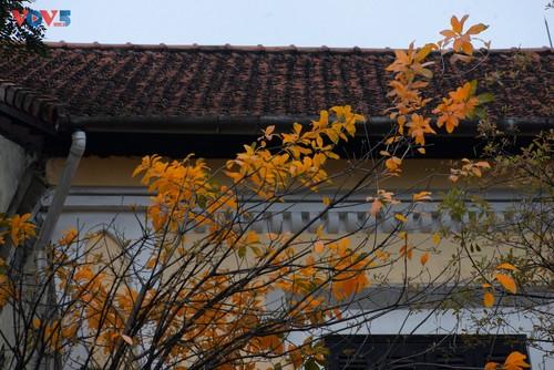 Màu áo mới của Hồ Gươm giữa mùa cây thay lá - ảnh 9
