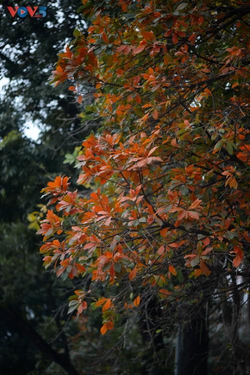 Màu áo mới của Hồ Gươm giữa mùa cây thay lá - ảnh 8