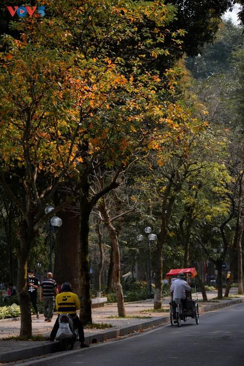 Màu áo mới của Hồ Gươm giữa mùa cây thay lá - ảnh 1