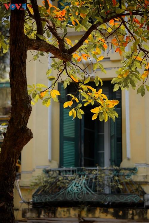 Màu áo mới của Hồ Gươm giữa mùa cây thay lá - ảnh 12