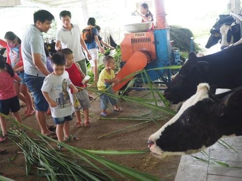 Un peu d'agrotourisme à Môc Châu - ảnh 4
