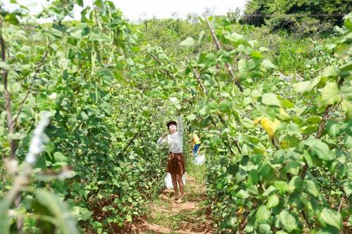 Un peu d'agrotourisme à Môc Châu - ảnh 2