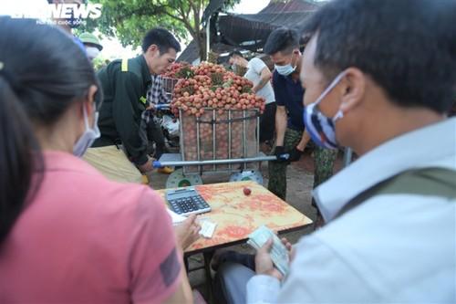 Ấn tượng hàng dài xe chở vải nối đuôi nhau đến điểm thu mua ở Bắc Giang - ảnh 10