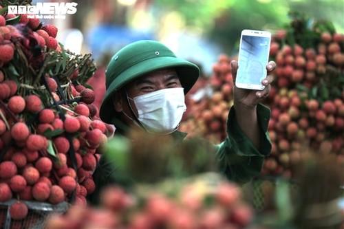 Ấn tượng hàng dài xe chở vải nối đuôi nhau đến điểm thu mua ở Bắc Giang - ảnh 11