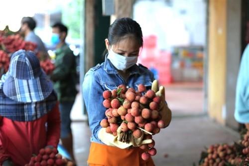 Ấn tượng hàng dài xe chở vải nối đuôi nhau đến điểm thu mua ở Bắc Giang - ảnh 12