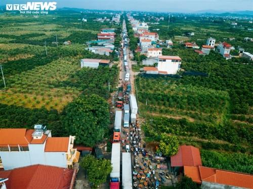 Ấn tượng hàng dài xe chở vải nối đuôi nhau đến điểm thu mua ở Bắc Giang - ảnh 3