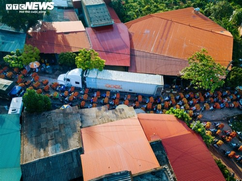 Ấn tượng hàng dài xe chở vải nối đuôi nhau đến điểm thu mua ở Bắc Giang - ảnh 4