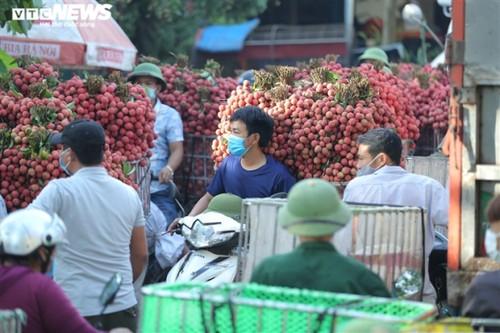 Ấn tượng hàng dài xe chở vải nối đuôi nhau đến điểm thu mua ở Bắc Giang - ảnh 6
