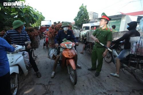 Ấn tượng hàng dài xe chở vải nối đuôi nhau đến điểm thu mua ở Bắc Giang - ảnh 8