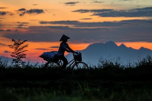 Đẹp ngây ngất mùa lúa chín ở ngoại ô Hà Nội - ảnh 11