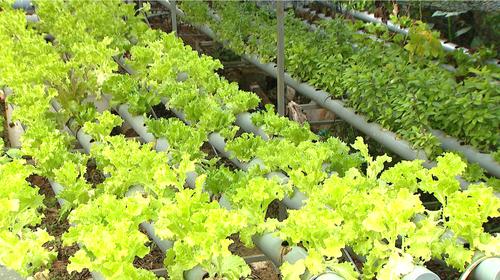农园民宿旅游——嘉莱省旅游发展的新方向 - ảnh 2