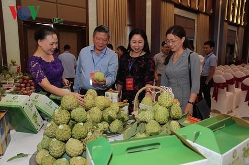 Provinsi Son La memperhebat ekspor hasil pertanian bersih dan aman. - ảnh 1