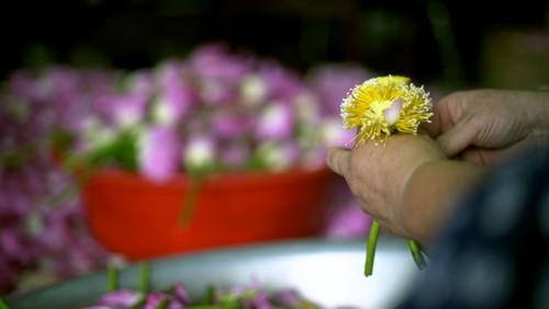 Ханойский лотосовый чай - утончённый вкус и изысканный аромат - ảnh 11