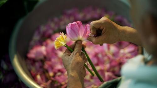 Ханойский лотосовый чай - утончённый вкус и изысканный аромат - ảnh 13