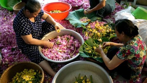 Ханойский лотосовый чай - утончённый вкус и изысканный аромат - ảnh 22