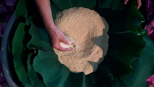 Ханойский лотосовый чай - утончённый вкус и изысканный аромат - ảnh 23