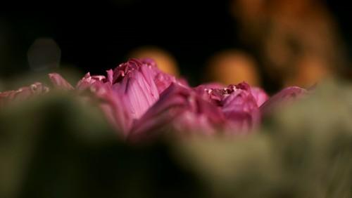 Ханойский лотосовый чай - утончённый вкус и изысканный аромат - ảnh 29
