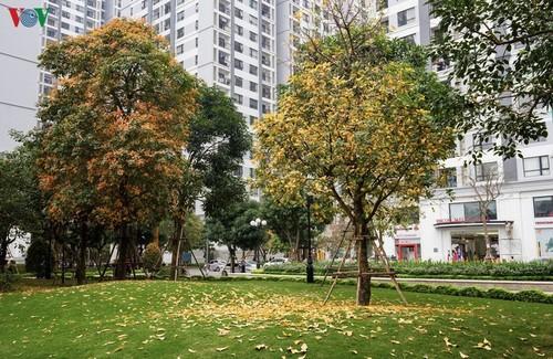 Красочный Ханой - листья деревьев меняют цвет - ảnh 1