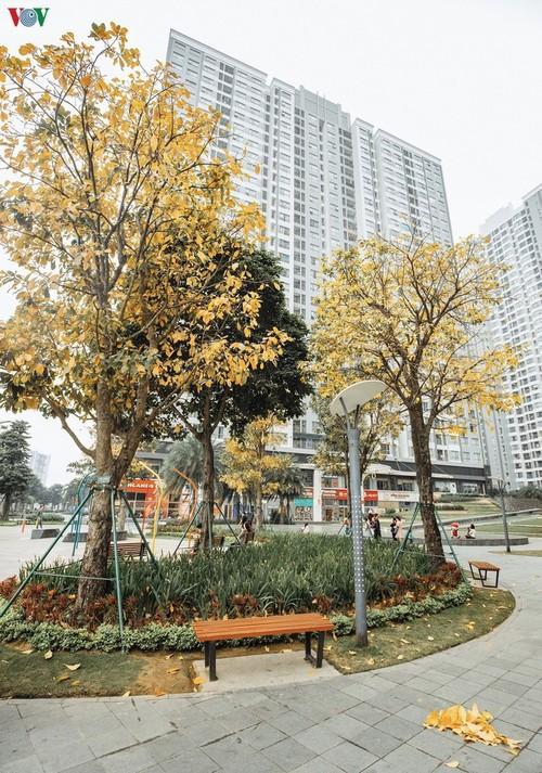 Красочный Ханой - листья деревьев меняют цвет - ảnh 6