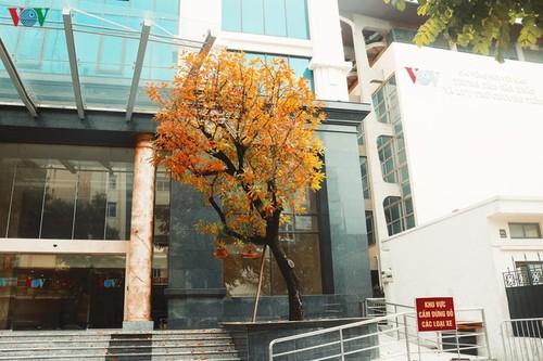Красочный Ханой - листья деревьев меняют цвет - ảnh 8