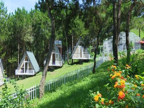 «Pu Nhi Farm» - интересный туристический объект на северо-западе Вьетнама - ảnh 1