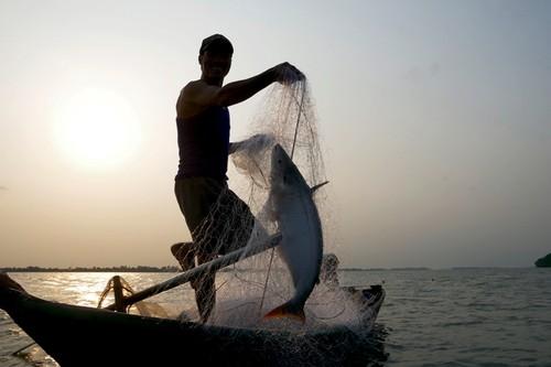 Về cồn An Lộc săn cá bông lau sông Hậu - ảnh 1