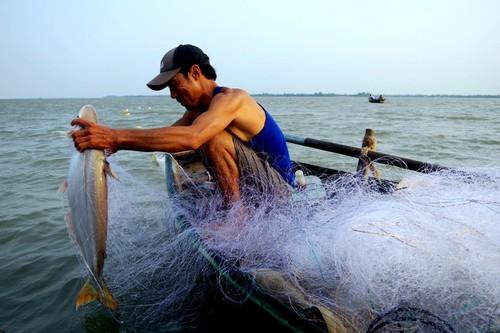 Về cồn An Lộc săn cá bông lau sông Hậu - ảnh 9